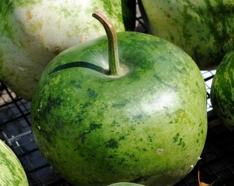 Gourd, Speckled Apple Gourd Seeds - Excellent for Fun Projects