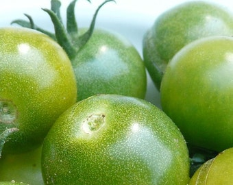 Tomato, Organic Green Doctors Frosted Tomato Seeds