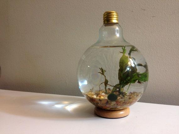 Large Lightbulb Fishbowl Kit