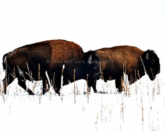 Two Buffalo in Winter, Woodland, Wildlife Photography, Fine Art Photography