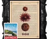 Artistic Urchin Art Print Urchin Vintage Dictionary Print beautiful Antique Book Page Art Print The Three Stages of Life