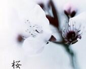 Sakura : cherry blossom flower spring photography japanese surreal home decor white pink gray 8x8 10x10 14x14 16x16 20x20 24x24 30x30