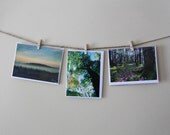 SALE Green Landscapes - Set of 3 Blank Photo Cards - Woodland -Thank You Cards- Mossy Green Trees, Gifts -Seascape, Beach, vistas, CLEARANCE
