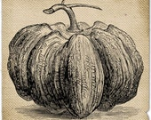 Pumpkin halloween Burlap Vegetable food image Digital sheet Download For print iron on transfer napkins aprons towel handbag pillow n861