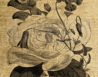 INSTANT DOWNLOAD Flowers Vintage Illustration - Download and Print Image Transfer - Digital Sheet by Room29 - Sheet no. 785