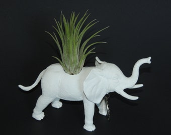 White elephant planter with air plant. White elephant gift.