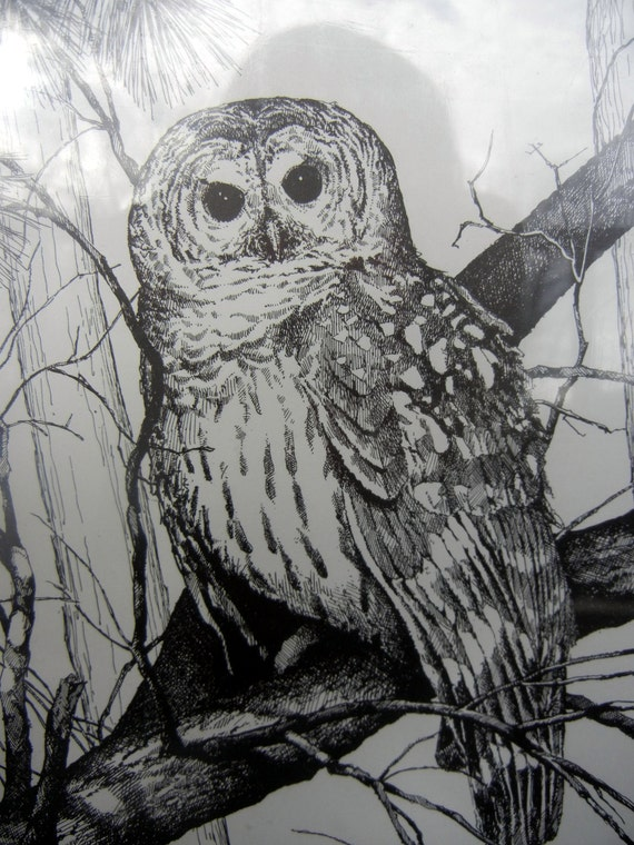 [owl in tree]