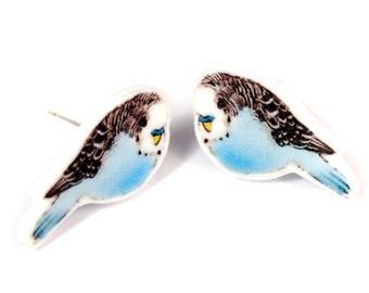 Budgie stud earrings ~ illustrated bird earrings