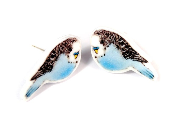 Budgie stud earrings ~ illustrated bird earrings