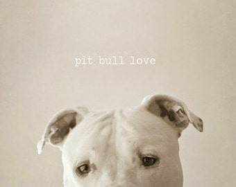 """Pit Bull Photography,  Pet Photography, Home Decor, Fine Art Photography 8x8 or  8x10 inches - """"Pit Bull Love"""""""
