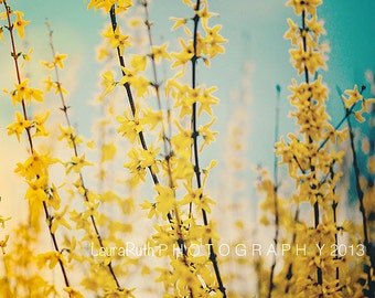 "Forsythia Photograph, Yellow Nature Photography, Mother's Day, Baby Nursery, Home Decor, Fine Art Photography 8x10 - ""A MOTHER'S DREAM"""