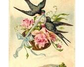 birds & roses - digital vintage postcard scan printable download jpg large image iron on transfer fabric transfer card tag scrapbook