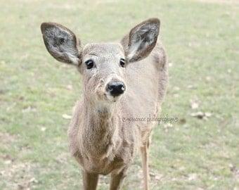 Deer Photography, Deer Art,  Pastel Deer Print, Green and Brown Art, Woodland Nursery, Wildlife Art, Nature, Woodland Animal, Deer Picture