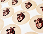 Stickers, Valentine Stickers, Envelope Seals, Anatomical Human Heart Stickers