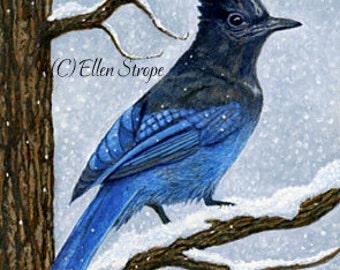 ACEO Card, Giclee print, Stellar Jays, bird art, bird ACEO, ACEO cards, bird decor, Ellen Strope, prints, art