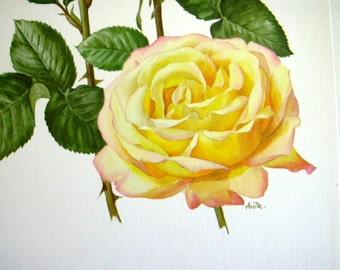 1962 Vintage  Botanical Illustration Print Yellow Madame A Meilland Rose Shabby Chic Anne Marie Trechslin