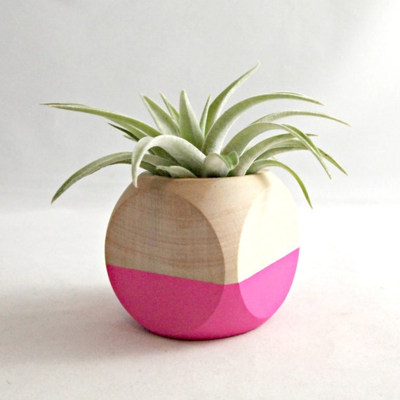 Mini Geometric Air Plant Planter // Neon Pink + Wood (with Air Plant)