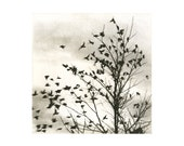 Fly Away, etching, warm sepia tone - 88editions
