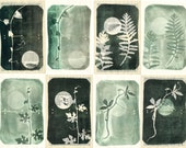 Botanical prints, set of eight prints, monoprints