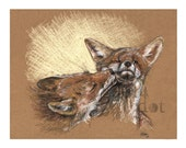 Red Foxes - 'Foxes'  - 5 x 7 - Color pencil Art Print