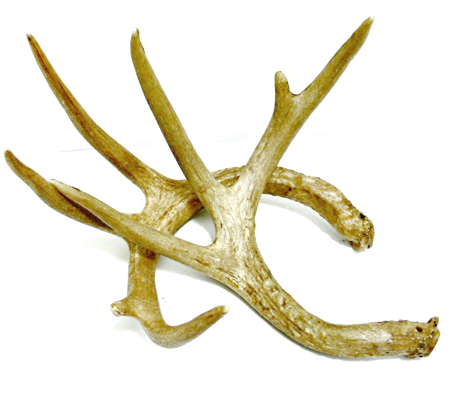 Faux deer antlers cabin or rustic table decor photography for Antler decoration