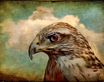nature photography, animals, nature, Hawk, bird, raptor, stormy, teal, gothic, mint, red, vintage look, 11x14
