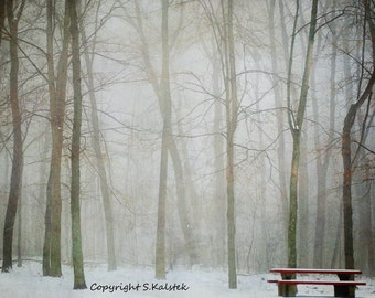 Misty Tree Landscape Photograph Empty Bench Snow Foggy Trees Forest Lovely Mist and Light Wall Decor 10x8
