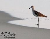 Bird Photography, sandpiper print, beach cottage decor, 5x7 inch print