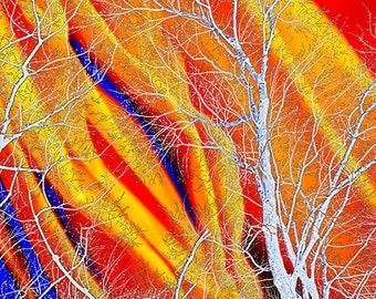 Surreal Tree Art, Fine Art Limited Edition Print, orange, blue, Conceptual wall art