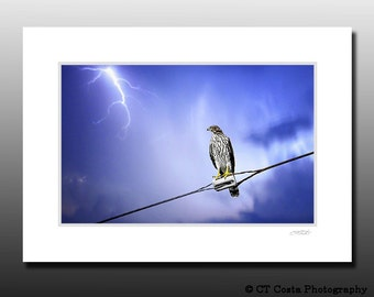 Coopers Hawk Nature Print, Lightning Photography, Signed Matted Print, blue, Ready for framing