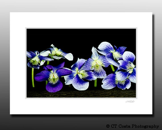 Wildflower Photo, Blue, Purple flowers, Signed Matted Print, Ready for Framing, Bathroom wall decor
