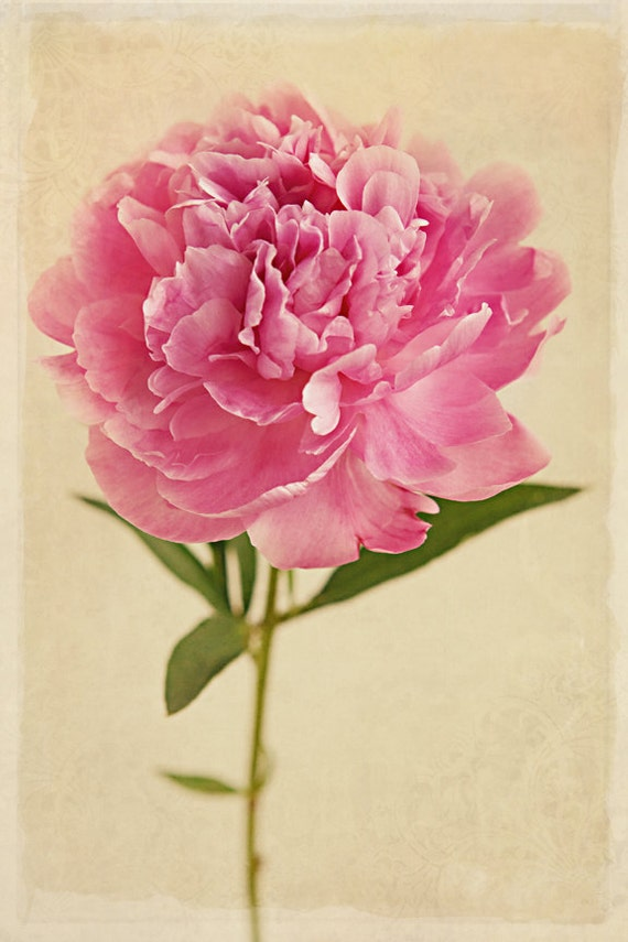 Items similar to Wall Flower, Pink Peony, Home Decor, Fine ...