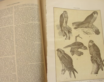 Falcons - 1911 - original encyclopedia page