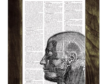 Summer Sale Head Anatomy Study - Doctors gift- Dictionary Book Page Print - Human Anatomy Art - Gift for medical student  SKA082