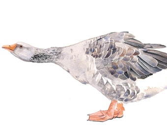 Goose Painting - gander- Bird art Print of watercolor painting A4 print wall art print - bird art - art print - wildlife print