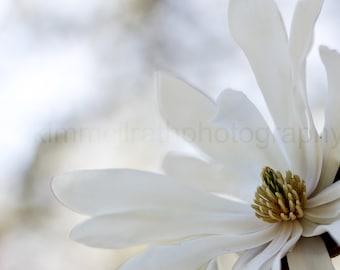 Digital Download - Central Park Magnolias in Conservatory Gardens