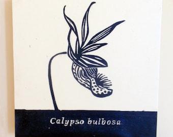 Calypso Bulbosa, Fairy Slipper, Venus's Slipper, Orchid, Relief Print on Wood Panel, encaustic, botanical, hand pulled print, original art