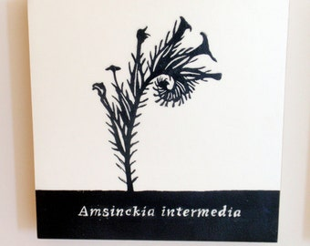 Amsinckia intermedia, Fiddleneck, Relief Print on Wood Panel, encaustic, botanical, hand pulled print, original art