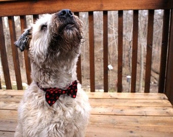 Black & Red Polka Dot Bow Tie Collar