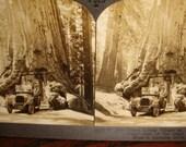 ViNtAgE 1920s KeYSTONE STEREOTyPE picture WaWONA redwood Tree RaRE stereoscope card California