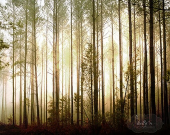 Glowing Forest- Tall Pines- Mysterious Mist- Foggy Light- Tree Photography- Arboreal Art- Nature Photography- 8x10 Fine Art Print
