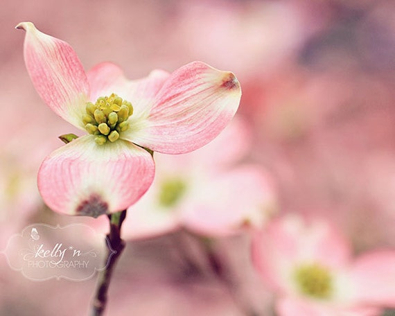 Pink Dogwood- Dogwood Tree- Pink Flower Photograph- Spring Flowers- Nature Photography- Floral Art- Pastel Colors- 8x10 Fine Art Print
