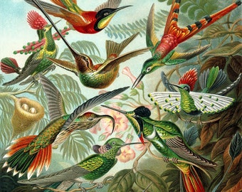 Humming-bird-fashion print-tropical birds-plant-spring-summer-old book page-Print