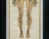 Human Anatomy 08 Vintage Illustration on Book Page Art Print (aca008)