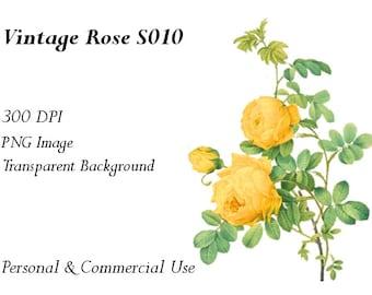 Vintage Rose Clip Art Transparent Png File  S010