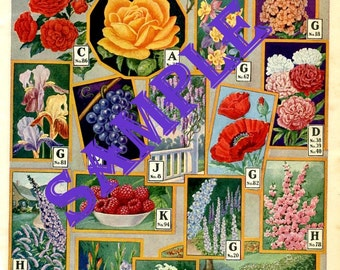 Digital Download-Larkin Catalog Page of Flowers, Shrubs and Vines from 1930