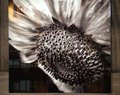 "Hope---A photograph of a sunflower infused onto an 16x16"" high-gloss metal plate"