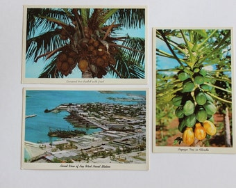 Old Florida Post Cards great group of 3