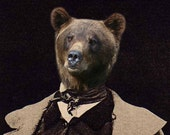 Papa Bear - Vintage Bear 8x8 Print - Athropomorphic - Altered Photo - Collage Art - Funny Animal Photo - Brown - Bear - AnimalFancy
