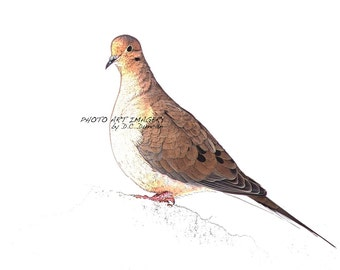 "Wild Bird Series Dove Print 5"" x 7"""